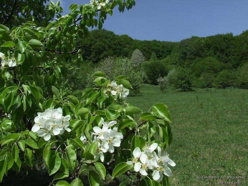 На лесной поляне весной