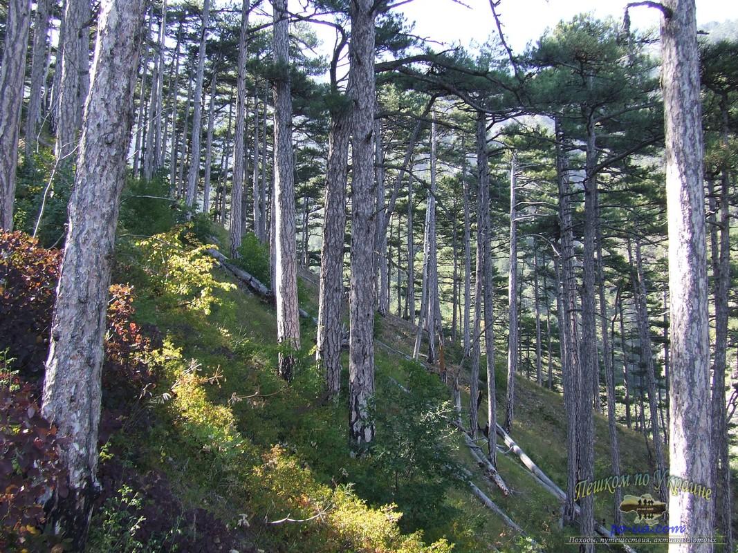 Заповедные леса на спуске в Ялту