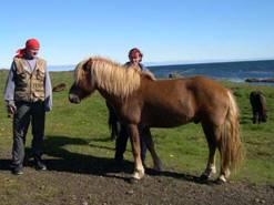 Отдохнуть в Крыму в конном спортивном клубе всегда хорошо