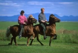 Хорошо проскакать на коне по Крымской долине