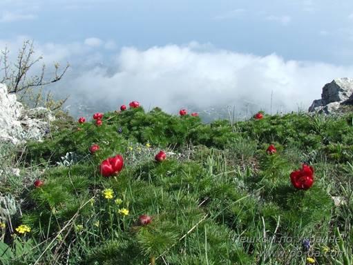 Цветы над облаками