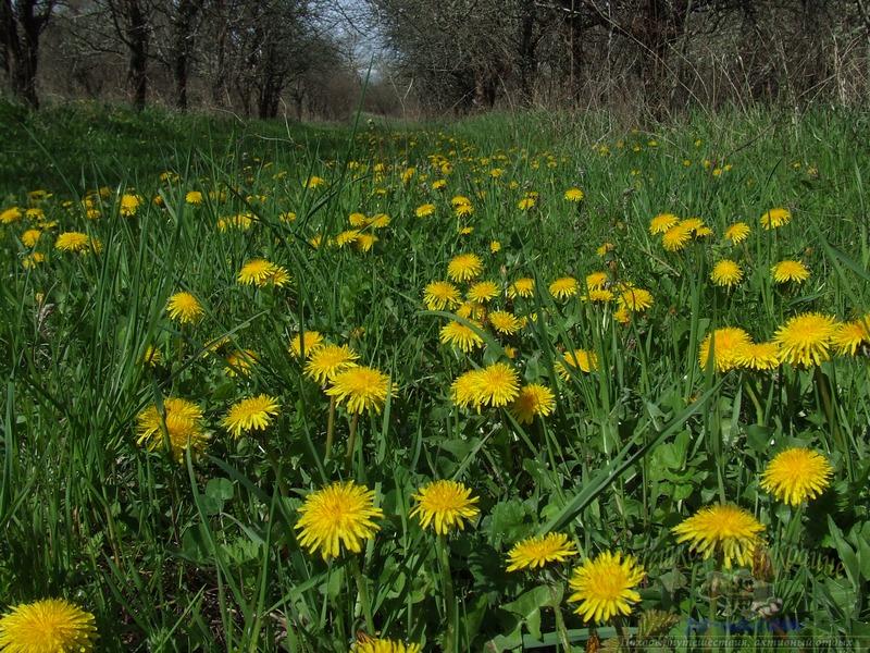 Весной в Крыму