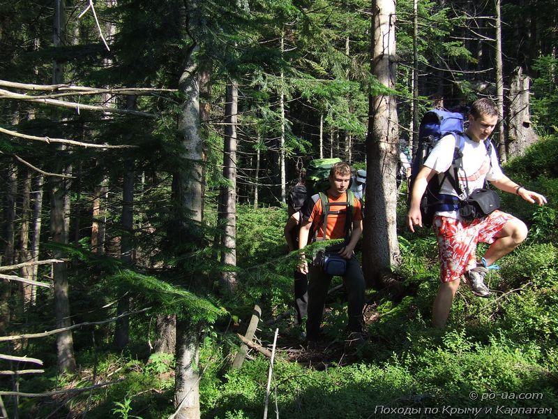 По глухим Карпатским лесам
