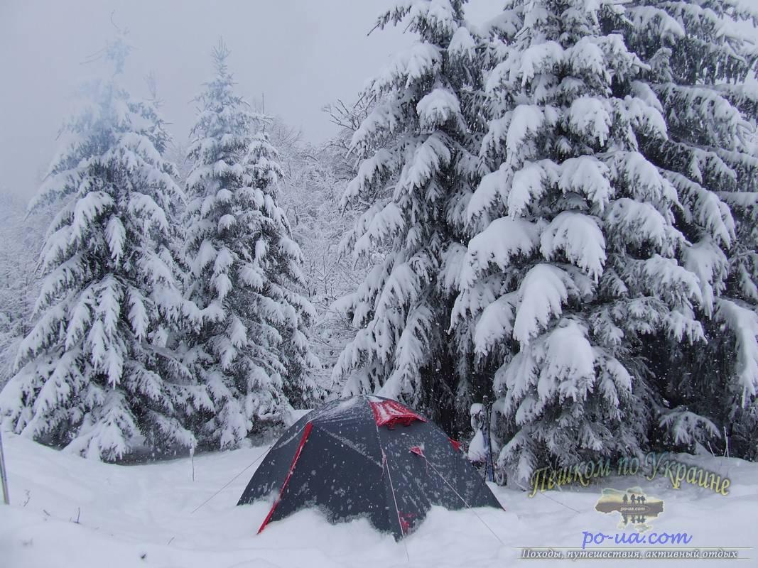 Палатка под смерекой