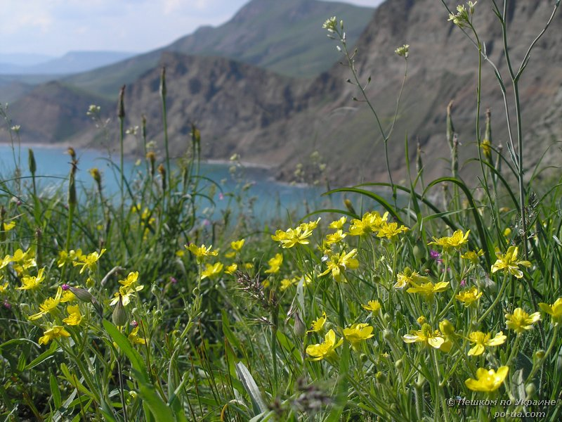 Весенние цветы на Меганоме