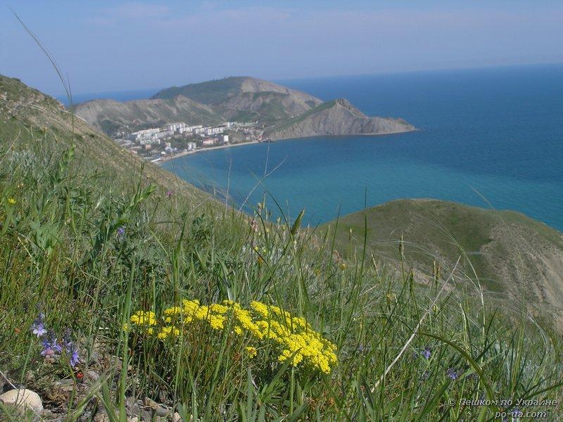 Весенние цветы на склоне у Орджоникидзе