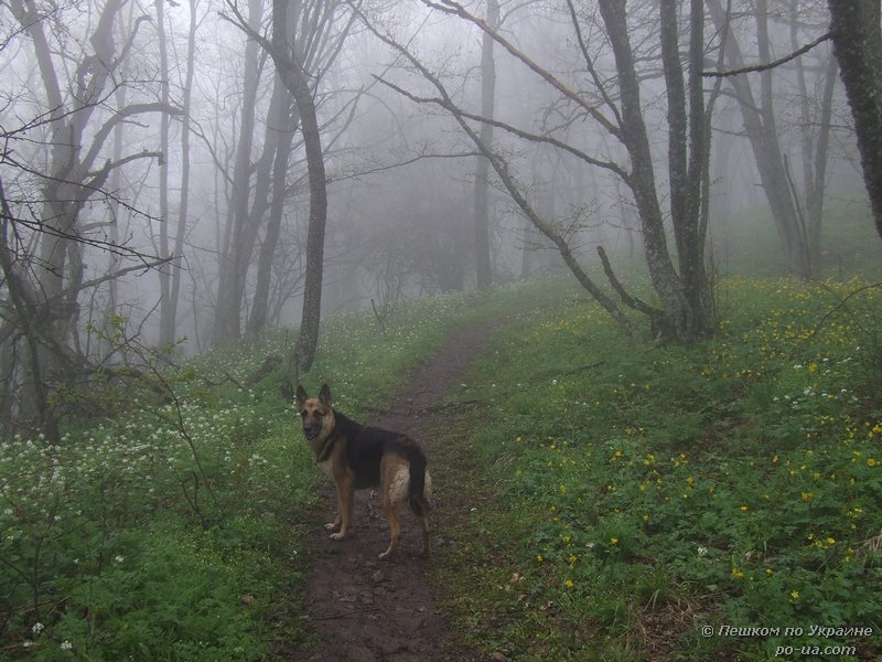 Туман в весеннем лесу