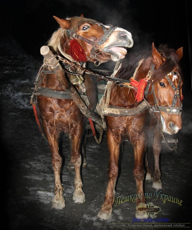 Кони, пгт Ворохта, активный рождественский тур