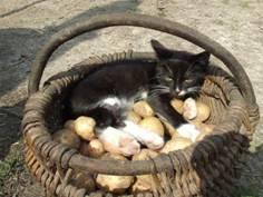 Кот в корзине