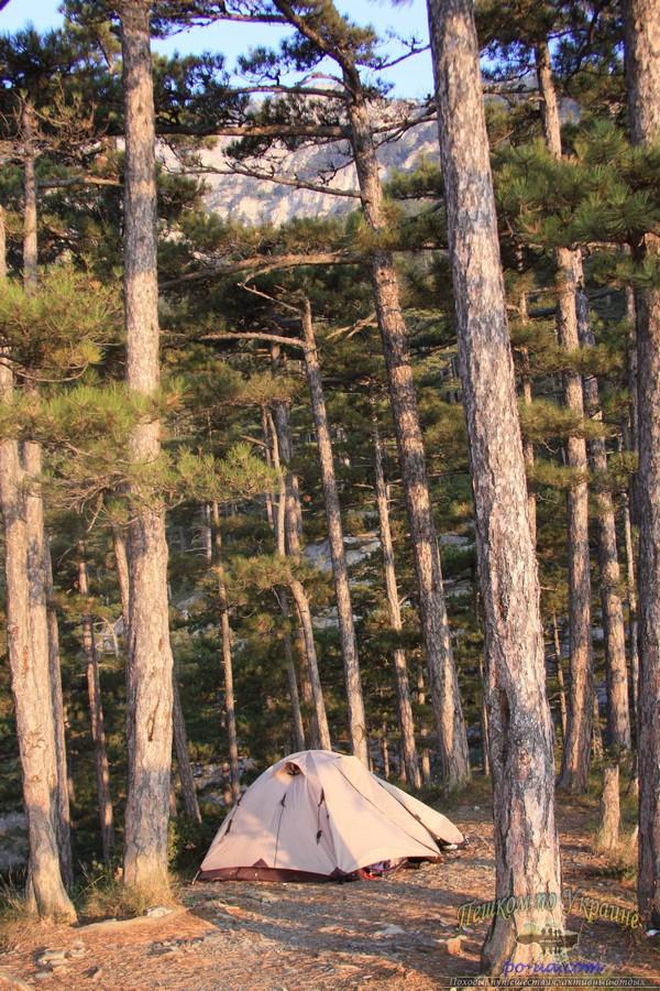 Дикий отдых в Крыму, палатка в сосновом бору