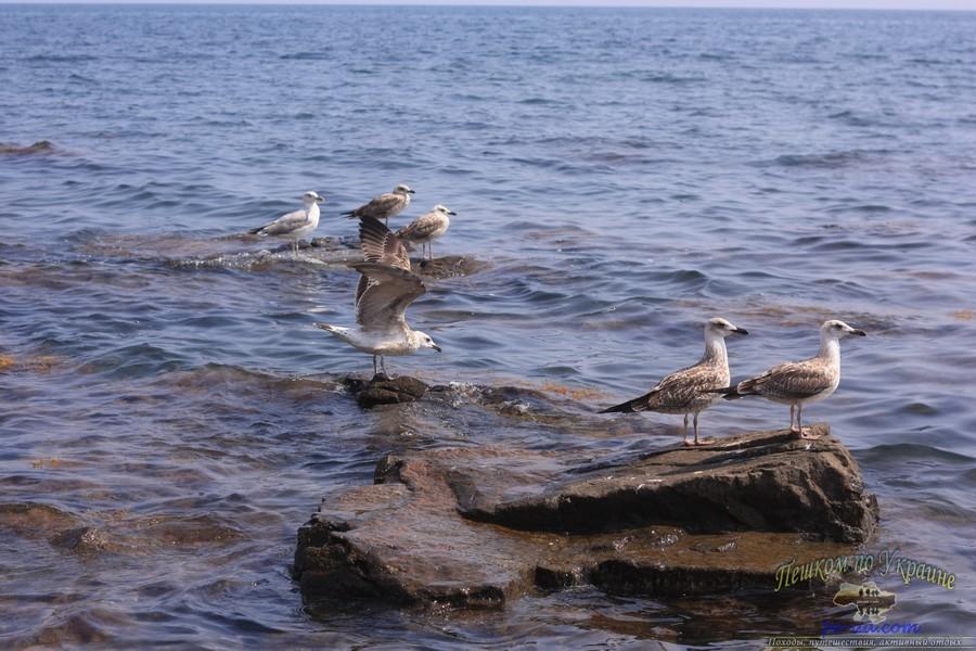Чайки на диком пляже, отдых с палаткой в Крыму