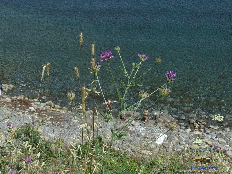 Активный отдых на море - прозрачна вода на диком пляже
