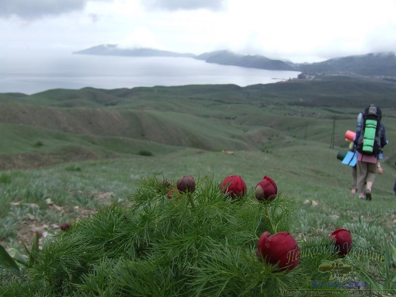 Пион узколистный на фоне полуострова Киик-Атлама