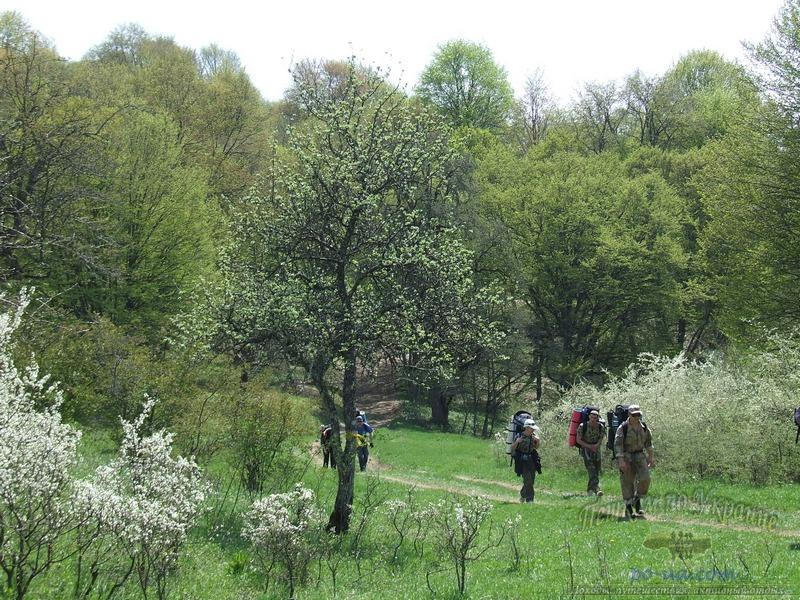 По весеннему Крымскому лесу