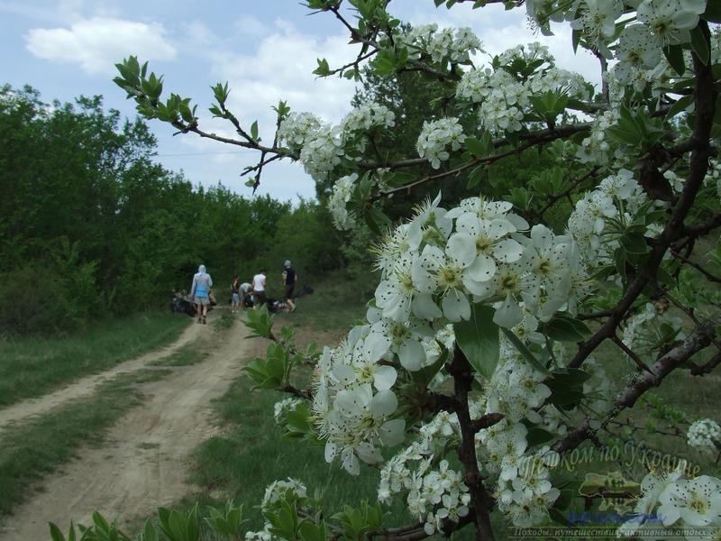 По дороге весной