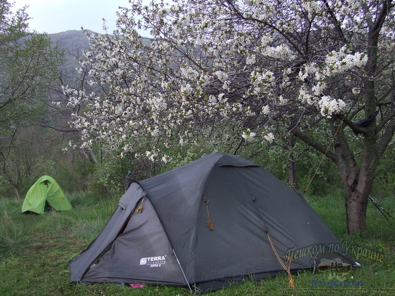 Под цветущим деревом
