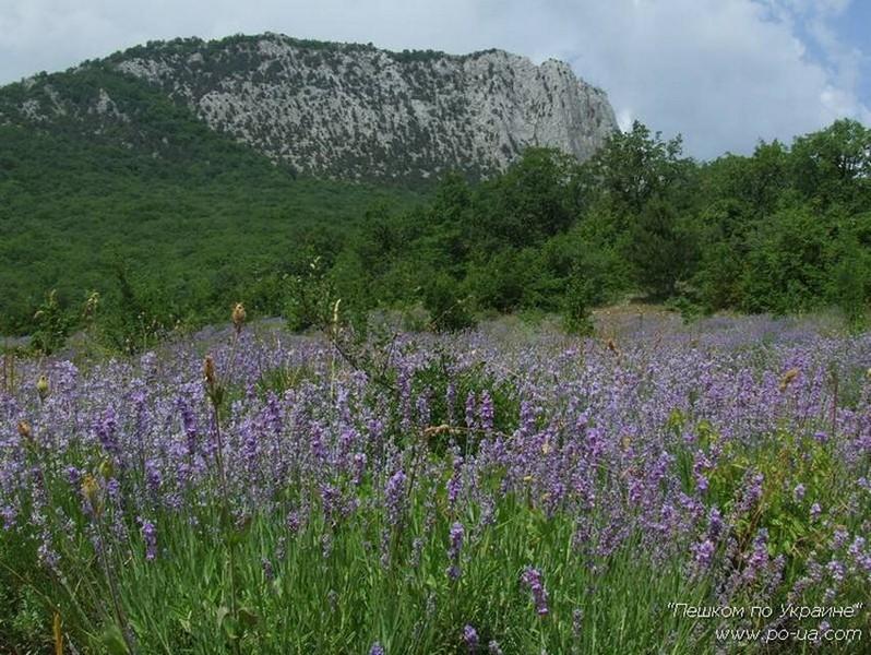 Через поле лаванды на гору Парагельмен