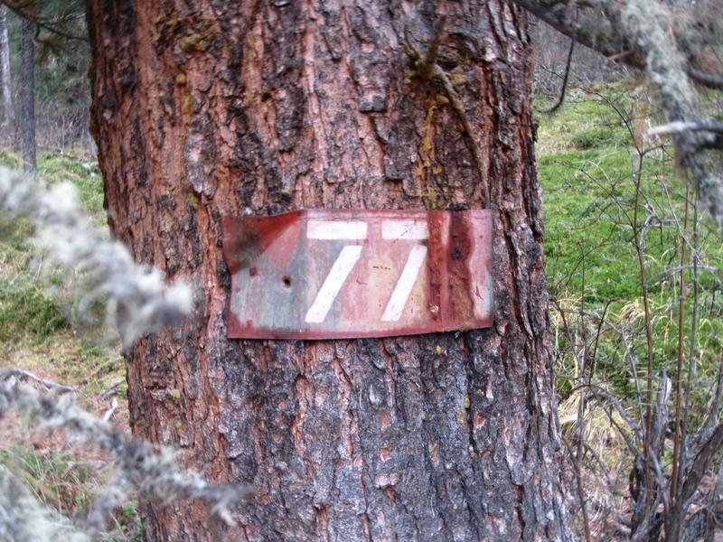 77 горно-таежный пешеходный маршрут по Алтаю