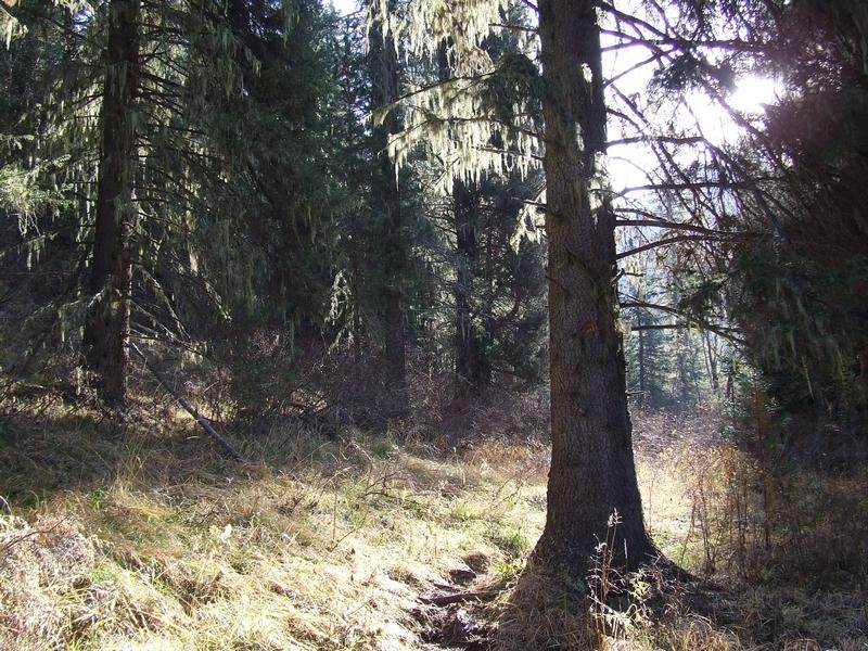 Алтайская тайга